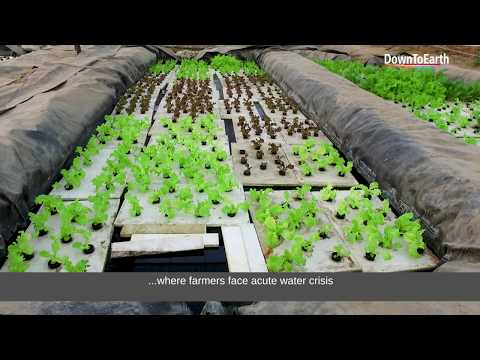 Aquaponics (एक्वापॉनिक्स) can be a profitable agriculture (खेती) technique for Indian farmers
