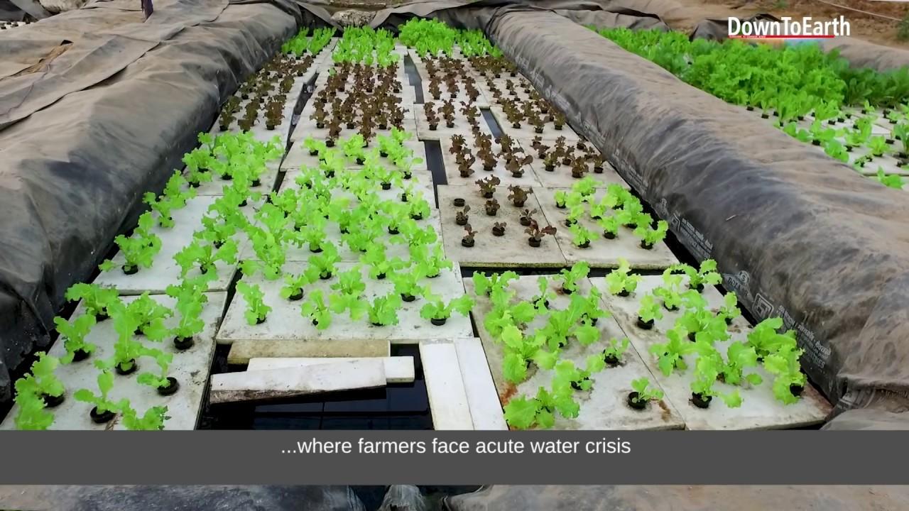 Climate smart aquaponics (एक्वापॉनिक्स) can be a profitable agriculture  (खेती) technique