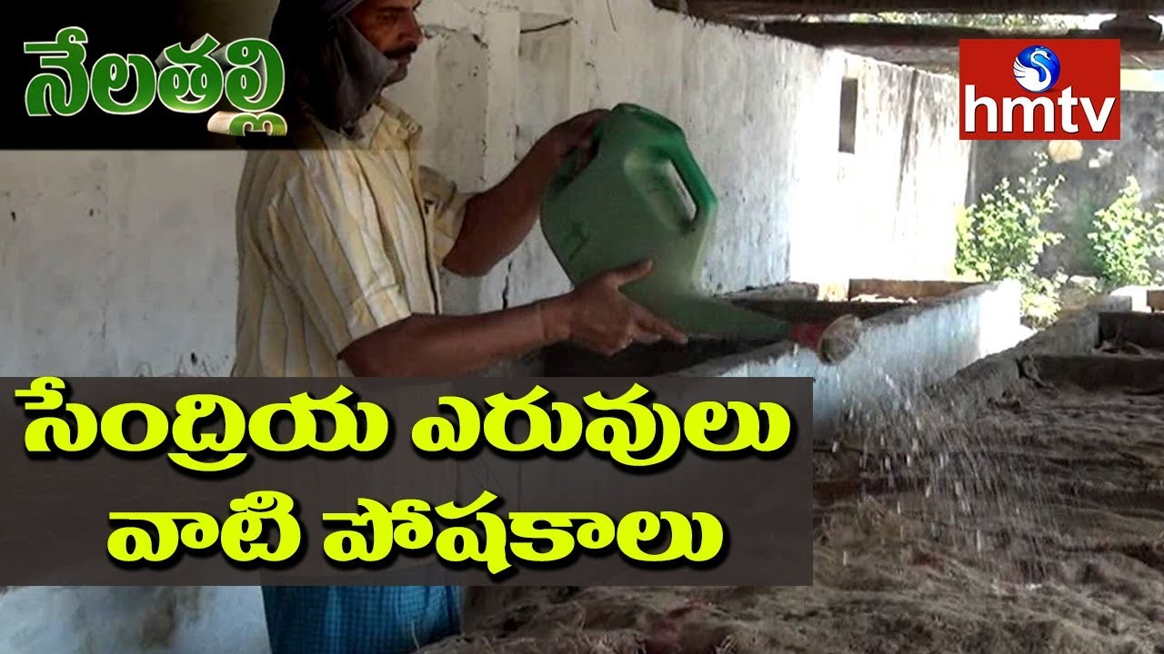 what-are-the-nutrient-values-of-organic-fertilizers-స-ద-ర-య-ఎర-వ-ల-వ-ట-ప-షక-ల-hmtv
