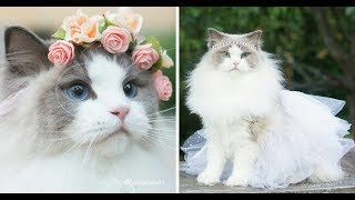 Kucing lucu comel imut gemes bikin ketawa ngakak part 3