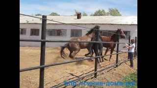 Ипподром: Лошади дерутся г. Оренбург