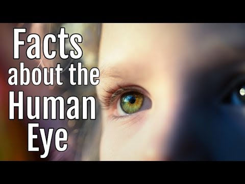 Facts About The Human Eye Anatomy Classroom Video For Kids Youtube