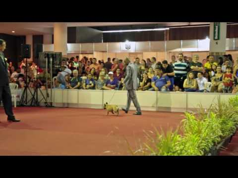 KCEC - Kennel Club do Estado do Ceará - 03,04-2016