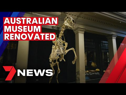 Sydney's Australian Museum has reopened after a renovation   7NEWS