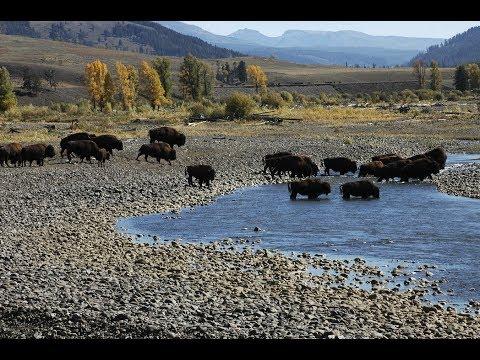 Yellowstone se agita e preocupa cientistas..