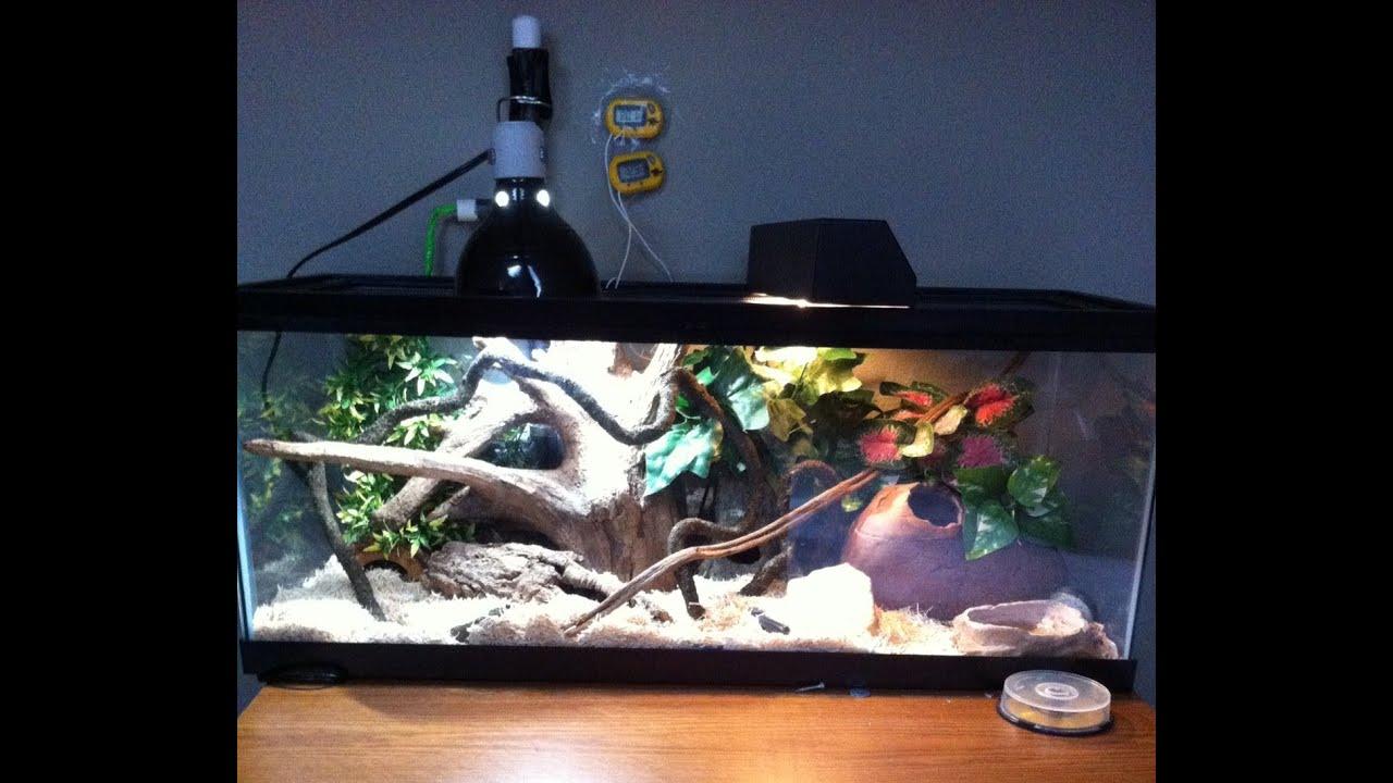 & corn snake setup 2013 - YouTube