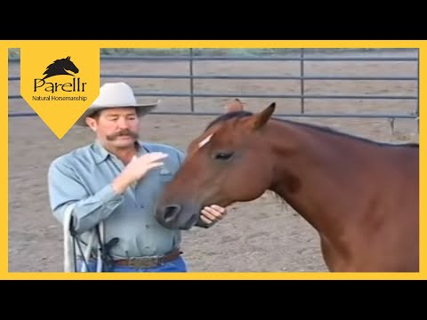 Parelli Natural Horse Training Tip  Approaching a horse in a corral