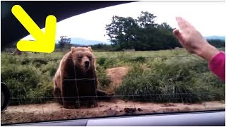 A Woman Waved At This Bear From The Safety Of Her Car – And The Animal's Reaction Was Caught On Film