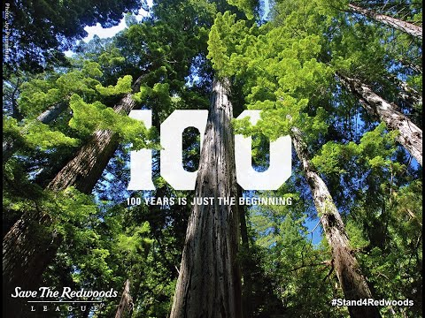 Save The Redwoods Celebrates 100 Years Of Environmental Conservation