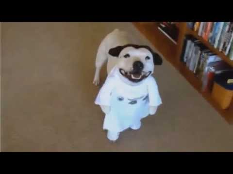 [Social Gear] Princess Dog Leia Halloween Costume - YouTube