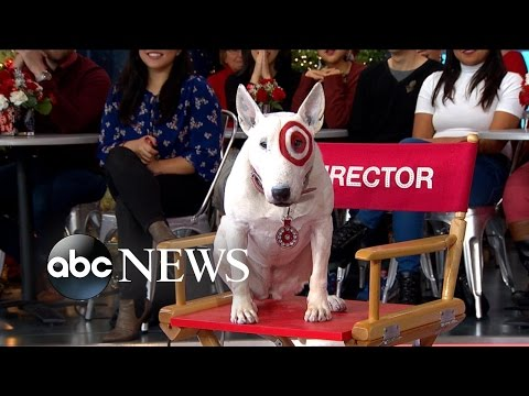 'Bullseye,' the Target Dog, Appears Live in Times Square