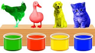 Learn Colors With Animals Bathing Colors Fun Finger Family Nursery Rhyme Song