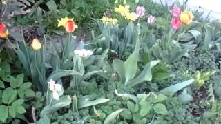 Свято-Данилов монастырь весной 2014(Это видео создано с помощью видеоредактора YouTube (http://www.youtube.com/editor), 2014-05-10T07:38:00.000Z)