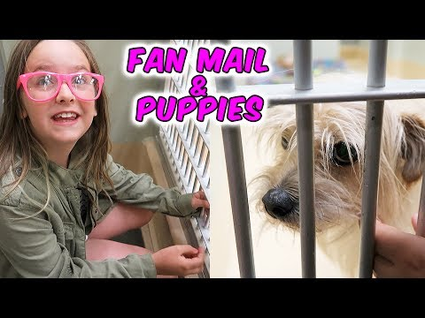 Fan Mail and Looking for Dogs and Puppies at the Animal Shelter