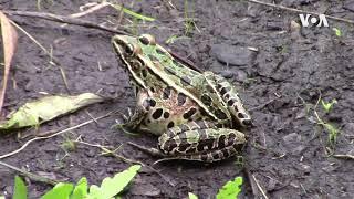 蝴蝶种群反映湿地的健康状况