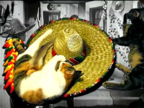 Mexican Cat Dance