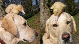 जानवरों की ऐसी दोस्ती देखकर, आप रोने लगोगे 5 Most Unbelievable Unlikely Animal Friendships