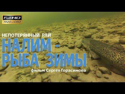 Непотерянный рай: Налим-рыба зимы