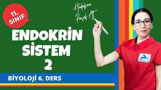 Endokrin Sistem 2 (Hormonal Sistem) | 11. Sınıf Biyoloji Konu Anlatımları #11bylj