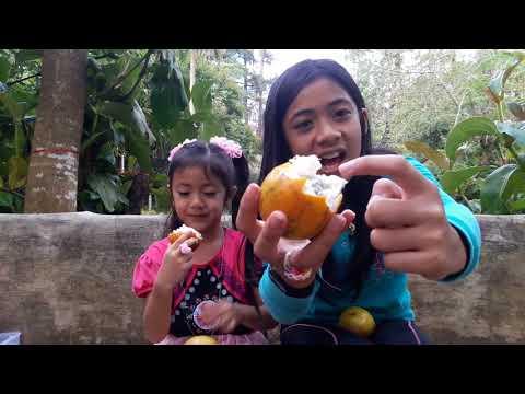 🍊 ORANGE PASSION FRUIT vs. 🍋 YELLOW PASSION FRUIT(Part 1)