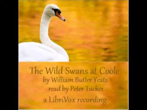 wild swan coole essay Written between 1916 and early 1917, the poem was first published in the june 1917 issue of the little review, and became the title poem in the yeats's 1917 and 1919 collections the wild swans at coole it was written during a period when yeats was staying with his friend lady gregory at her home at.