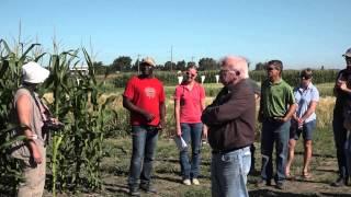 Fusarium Head Blight, Cereal Disease, and Dryland Grain Corn: Disease Crop Walk - Farming Smarter