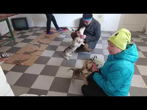 Suosittele koirarotua lapsiperheeseen, perheen ensimmäiseksi koiraksi