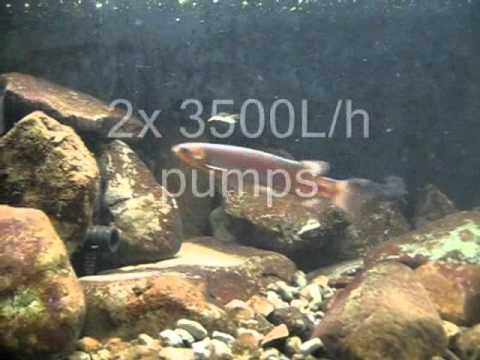 New Zealand Native Riffle Aquarium