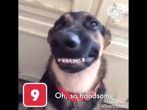TOP 10 SMILING DOGS