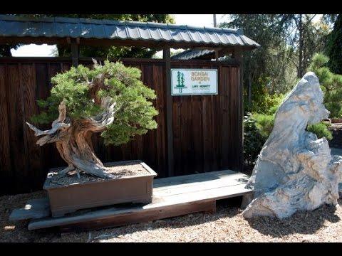 The Bonsai Garden At Lake Merritt Youtube