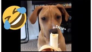 Dog Food Eating Funny - Best Dog Videos
