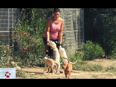 This woman cares for 70 rescued dogs on her own