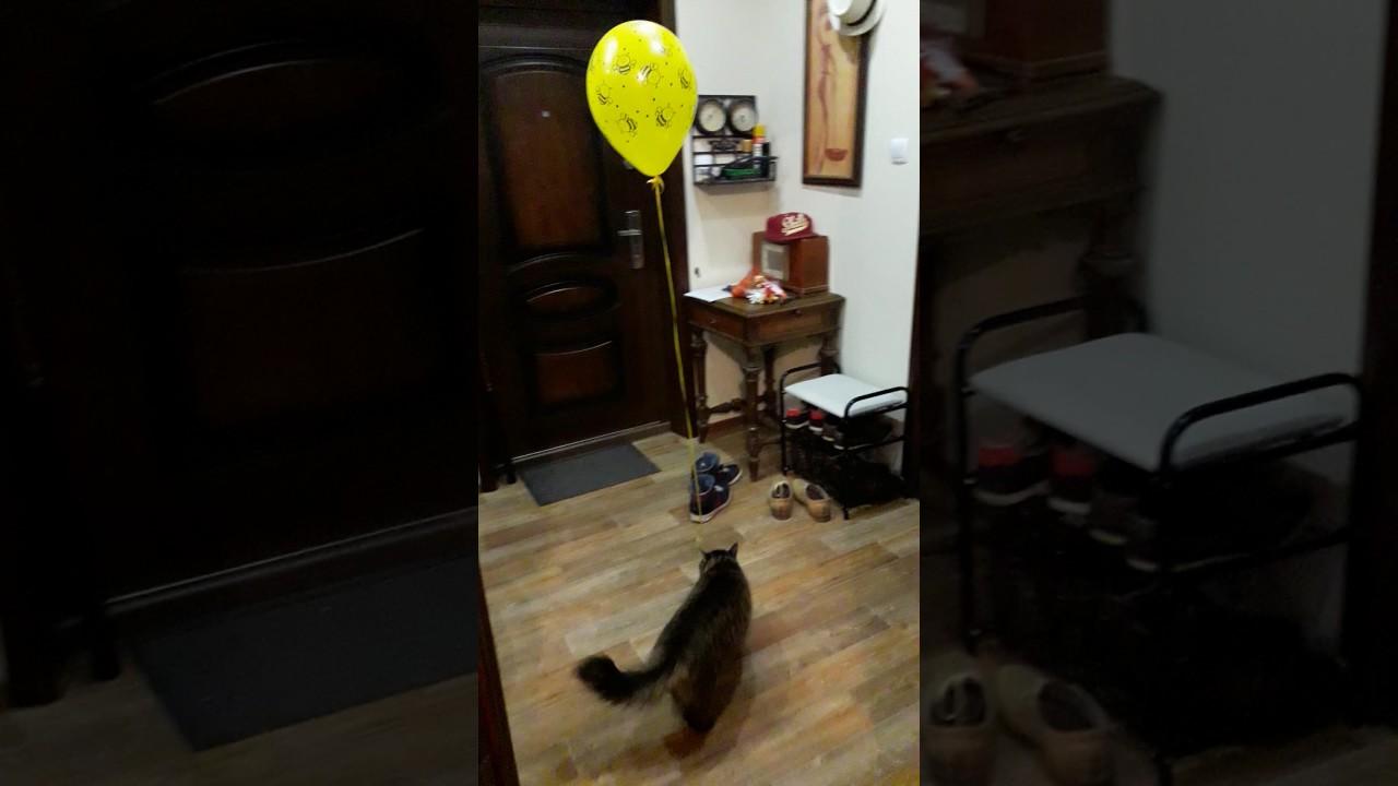 Занимаем кота