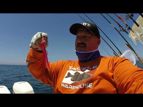 How To Catch White Sea Bass, Yellow Tail And Calico's On Tubes @ Channel Islands