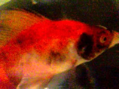 Black Spots On Fish