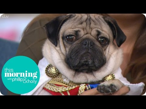 Holly And Phillip Meet Adorable Doug The Pug | This Morning