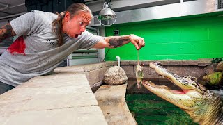 FEEDING MY HUGE PET ALLIGATOR A BUNCH OF RATS!! | BRIAN BARCZYK