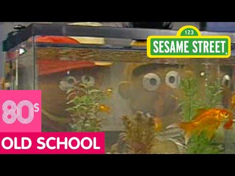 Sesame Street: Bert Gets A Fish Tank