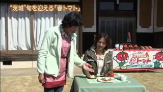 『磯山さやかの旬刊!いばらき』トマト編【3月15日】 「磯山さやかの...