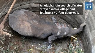 elephant-calf-rescued-in-coimbatore