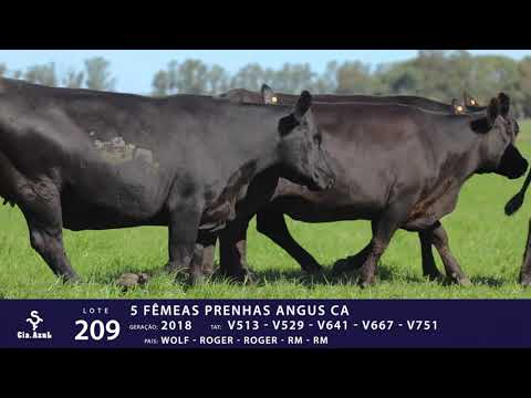 LOTE 209 - TAT V513 V529 V641 V667 V751