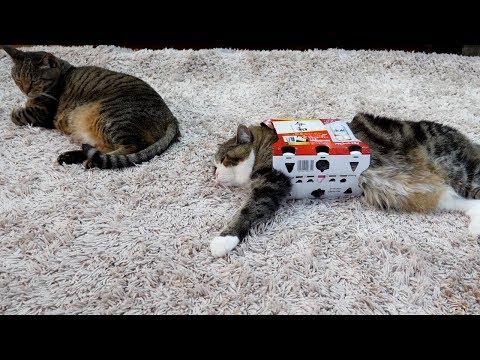 ビールの箱とまるとはな。-Beer box and Maru&Hana.-