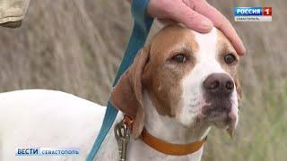 Любители дичи приехали на соревнования охотничьих собак в Севастополь
