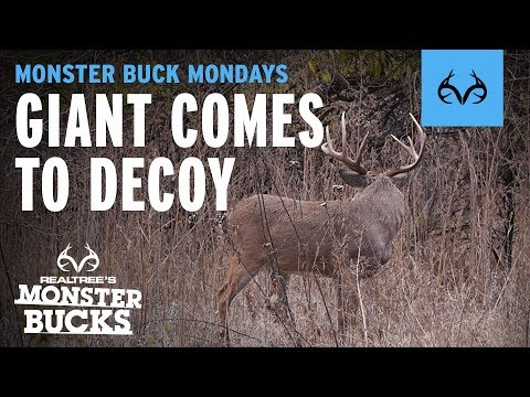Kansas Buck Comes to DECOY | Phillip Vanderpool