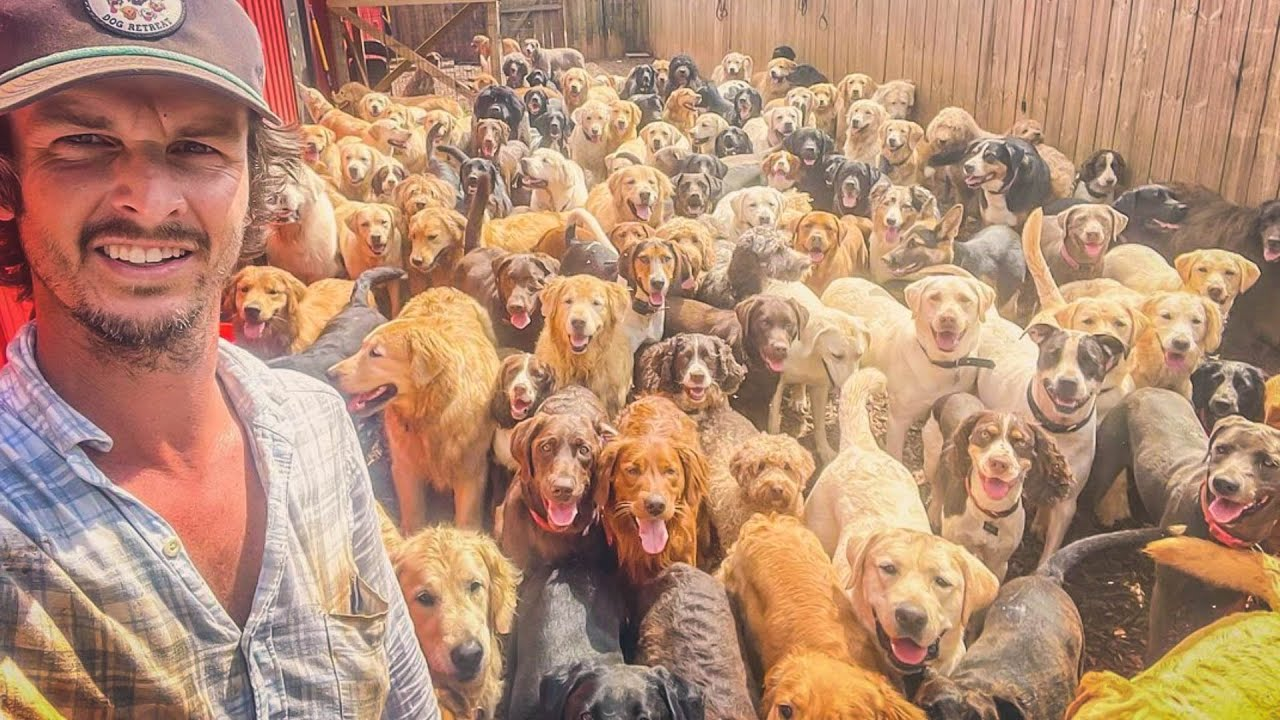 These Are All Dog Breeds That Currently Exist