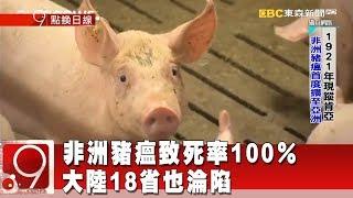 非洲豬瘟致死率100% 大陸18省也淪陷《9點換日線》2018.11.16