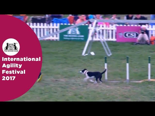 Kennel Club Novice Cup - Medium Semi Final | International Agility Festival 2017