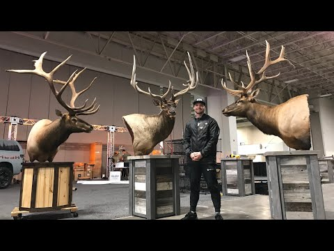 HUGE TAXIDERMY TOUR | CHECK OUT MY NEW BULLS!