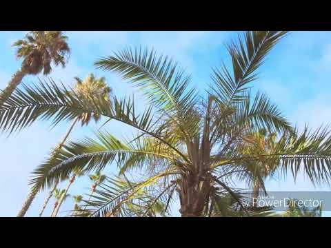 Feels~Calvin Harris lyrics Cover by RoadTrip