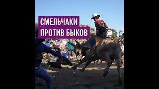 Смельчаки против быков